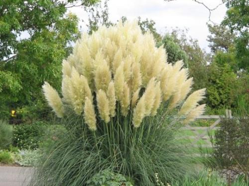 Juglans garden amenajare gradini plante ornamentale for Plante decorative