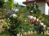 Gradina cu flori variate