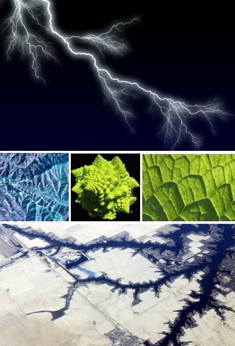 Forme si culori in natura